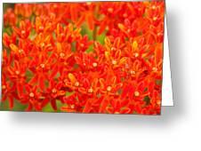 Wildflowers In The Smokies Greeting Card