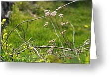 Wildflowers Marblehead Massachusetts Greeting Card