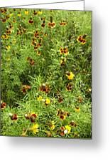 Wildflowers Nine Greeting Card