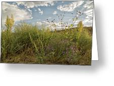 Wildflowers Of Chaco Greeting Card