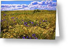 Wildflowers Of The Carrizo Plain Superbloom 2017 Greeting Card