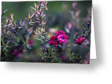 Wildflowers On A Cloudy Day Greeting Card