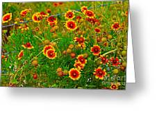 Wildflowers On The Barb Greeting Card