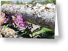 Wildflowers On The Fence Greeting Card