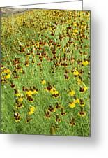 Wildflowers One Greeting Card