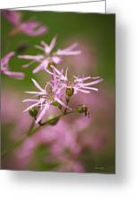 Wildflowers - Ragged Robin Greeting Card