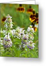 Wildflowers Three Greeting Card