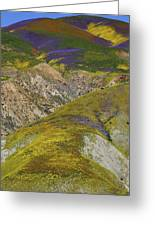 Wildflowers Up The Hills Of Temblor Range At Carrizo Plain National Monument Greeting Card