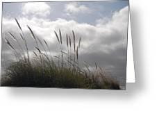 Wildgrass Greeting Card