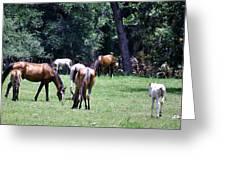 Wildhorses Of Cumberland Greeting Card