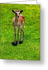 Wildlife 2 Greeting Card
