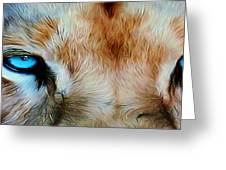 Wildlife Lion 10 Greeting Card