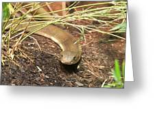 Wildlife6 Greeting Card