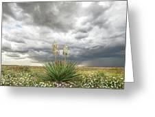 Wildorado Yucca Greeting Card by Scott Cordell