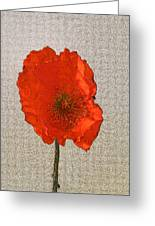 Will The Poppy In The Back Please Stand Up Greeting Card