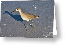 Willet And Shadow Greeting Card