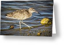 Willet Feeding In The Marsh 1 Greeting Card