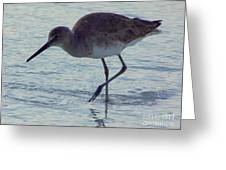 Willet In The Surf Greeting Card