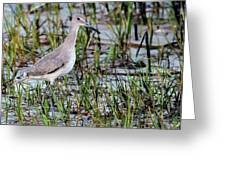 Willet On Beach Greeting Card
