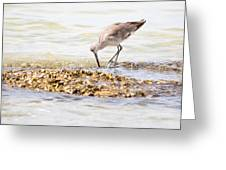 Willet Set 2 Of 4 By Darrell Hutto Greeting Card