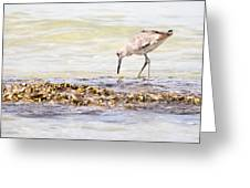 Willet Set 3 Of 4 By Darrell Hutto Greeting Card