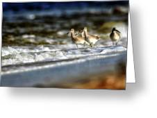 Willets In The Waves Greeting Card