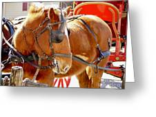 Williamsburg Carriage Horse Greeting Card
