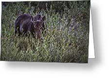 Willow Delite Greeting Card