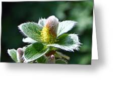 Willow Flower Greeting Card