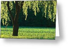 Willow Weeping Greeting Card