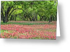 Willows,indian Paintbrush Make For A Colorful Palette. Greeting Card