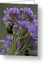 Willowwood Bee Greeting Card
