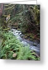 Wilson Creek #14 With Added Cedar Waxwing Greeting Card