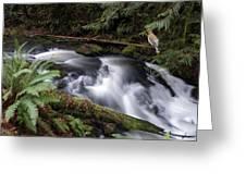 Wilson Creek #18 With Added Cedar Waxwing Greeting Card