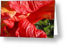 Wilting Hibiscus Two Greeting Card