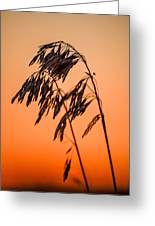 Wilting Sunset Greeting Card