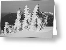 Wind And Snow Greeting Card