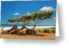 Wind Blown Tree Greeting Card by Brian Harig