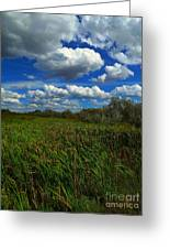 Wind In The Cattails Greeting Card