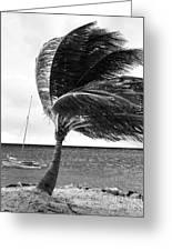 Wind Greeting Card by John Rizzuto