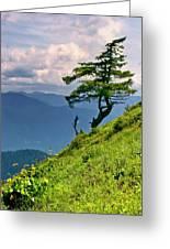 Wind Sculpted Conifer Greeting Card