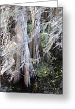 Wind Through The Cypress Trees Greeting Card