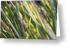 Wind Tossed - Greeting Card