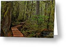 Winding Through The Willowbrae Rainforest Greeting Card