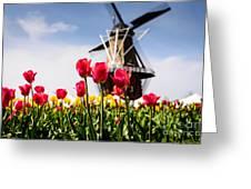 Windmill Island Tulip Gardens Greeting Card