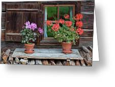 Window And Geraniums Greeting Card by Yair Karelic