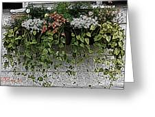 Window Box Flowers Greeting Card