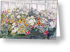 Window Box In The Sun Greeting Card