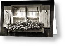 Window Flower Box 2 Greeting Card