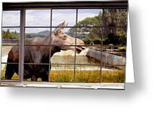 Window - Moosehead Lake Greeting Card